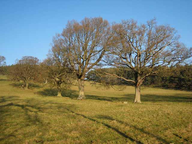 Trees near Prior House Farm