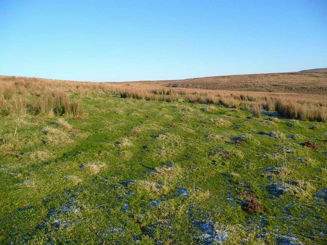 Green grass amongst the tussocks and bogs