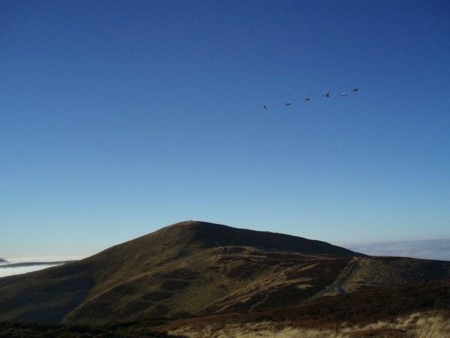 Six Swans Flying