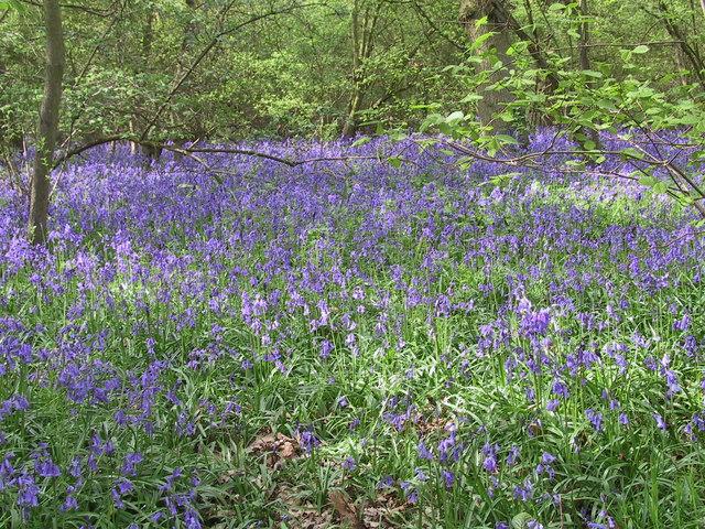 Dole Wood
