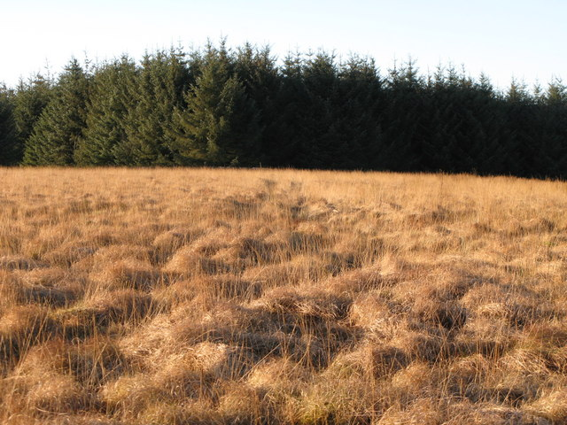 Plantation on Watch Hill