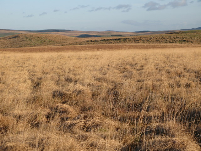 Moorland west of Black Rigg and Round Rigg