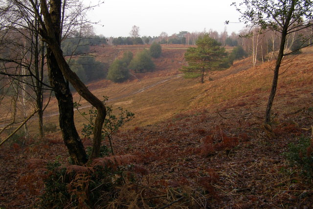 Acres Down, New Forest