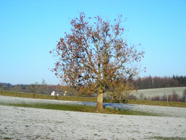 Tree in a Field Near Barnsoul