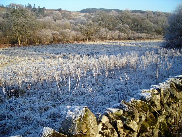 Frosty Field Near Birkbush