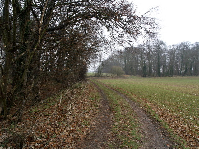 The footpath next to Bog Wood
