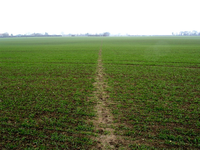 Newly Sown Field