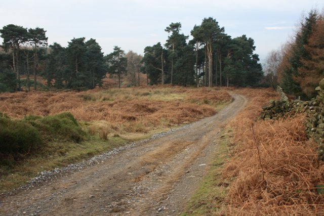 Track, Thimbleby Moor