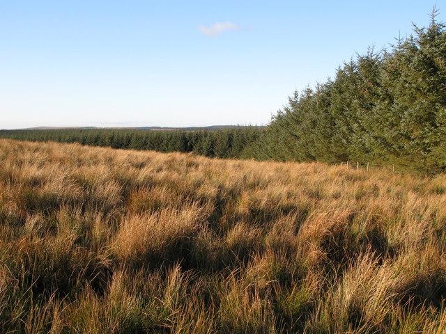 Plantation north of Watch Hill