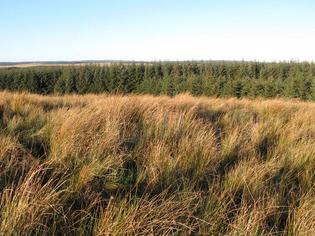 Plantation north of Watch Hill (2)