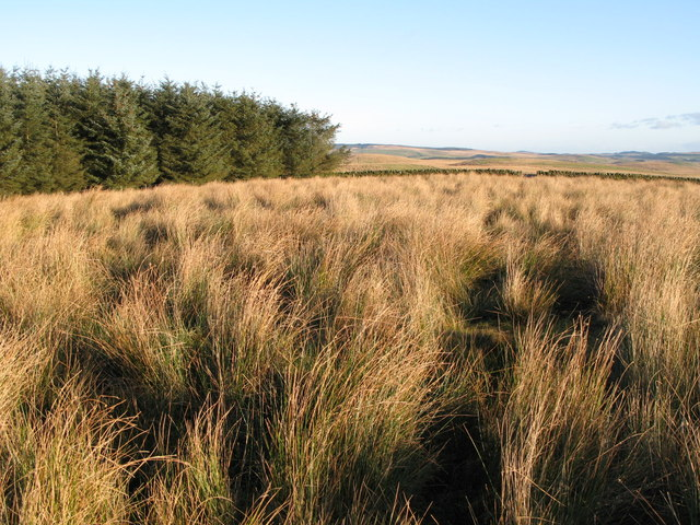 Thirlwall Common (North Side) (3)