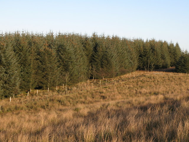 The southern edge of the plantation above Watch Hill