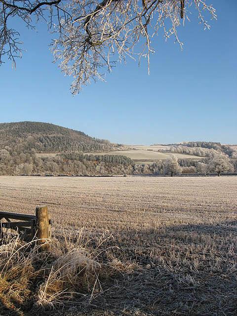 A frozen stubble field