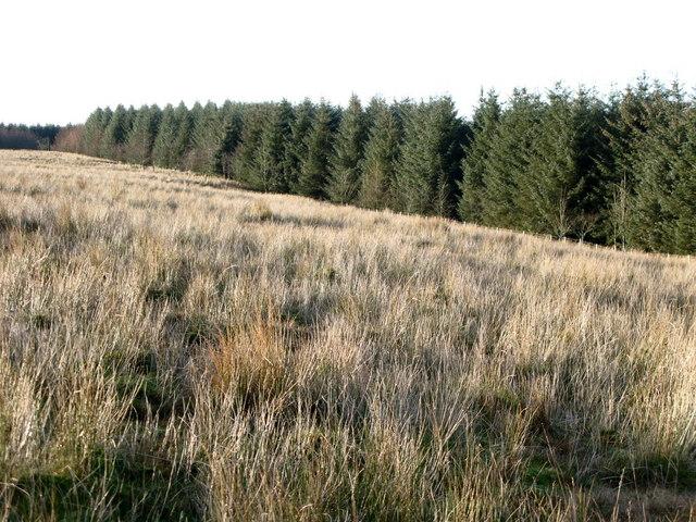 Plantation near Wou Crags