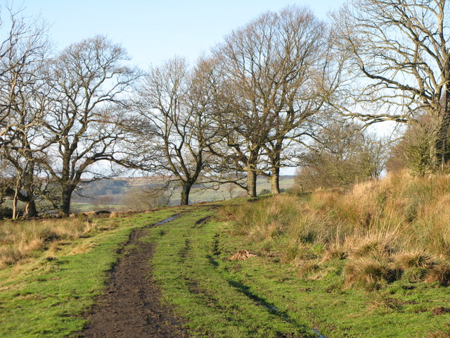 The trackbed of the former Hexham to Allendale railway line (3)