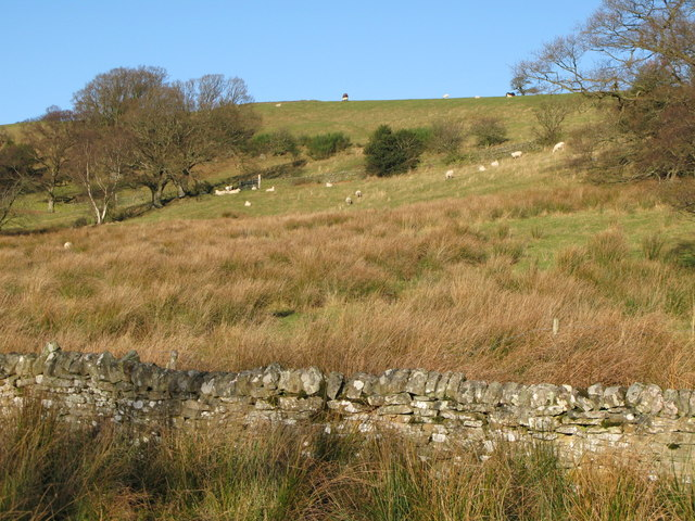 Hillside pastures near Struthers
