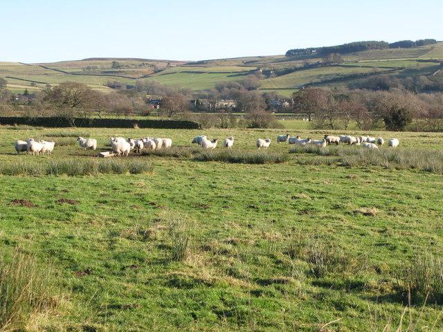 Pastures west of Catton (2)