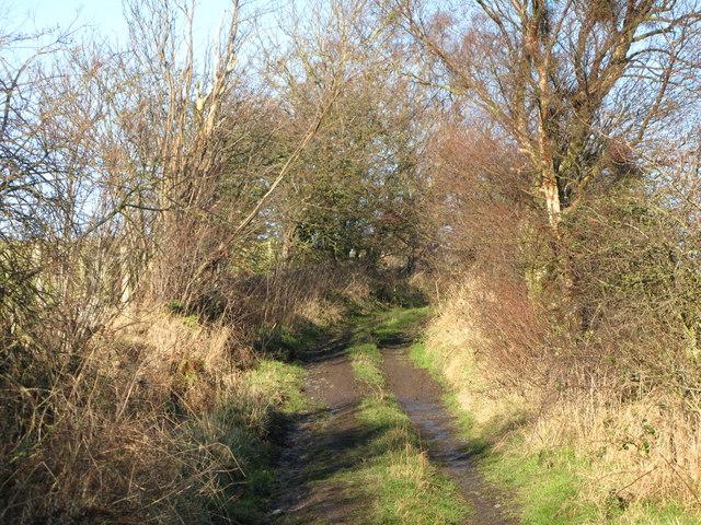 Lane near Struthers (2)