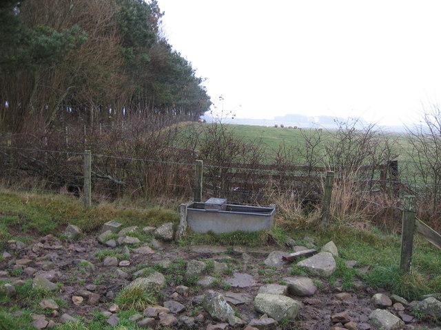 Water trough near Dyke Head