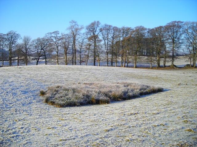 Trees and Frosty Field Near Farmersfield