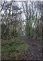 TA1229 : Woods behind the cemetery, Hull by Paul Harrop