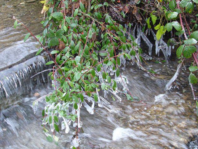 Icicles by the brook