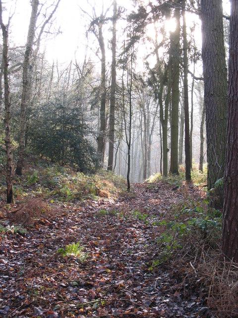 Path in Hackfall Wood