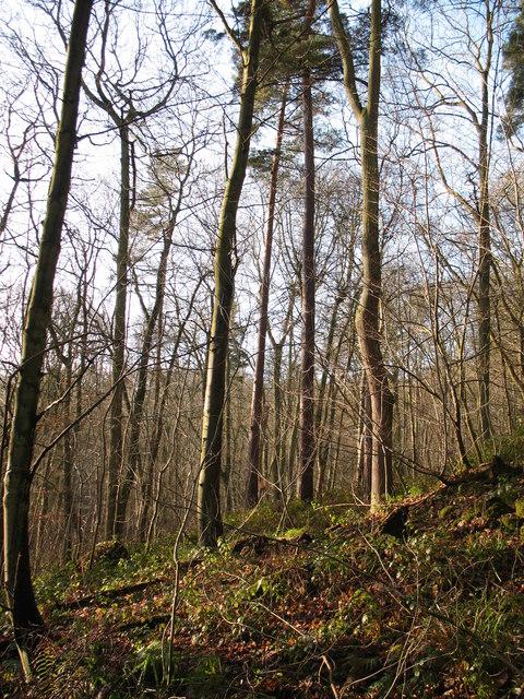 Winter sunshine in Hackfall Wood