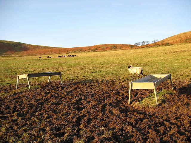 Livestock field