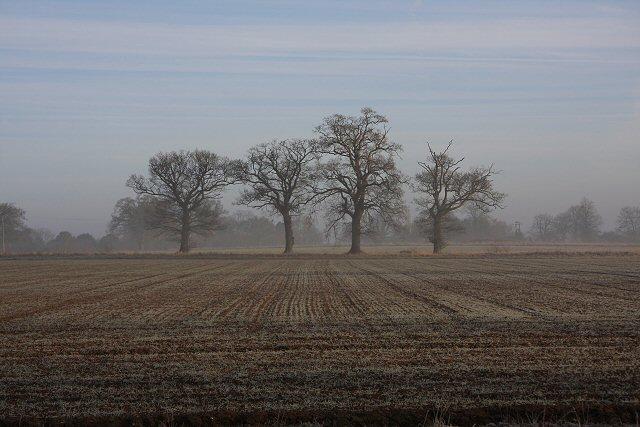 7 Acre Field, Little Saxham