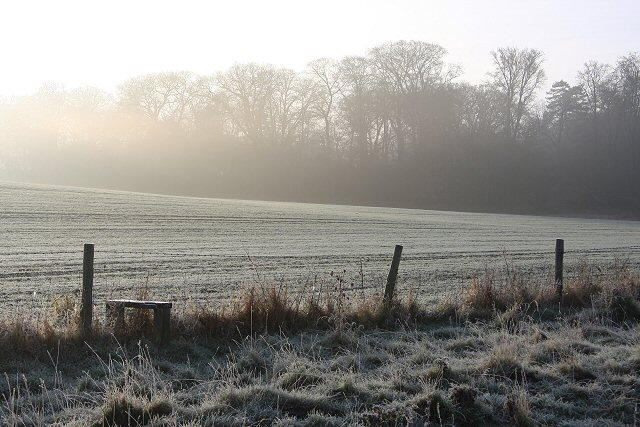 Frosty morning in Ickworth Park