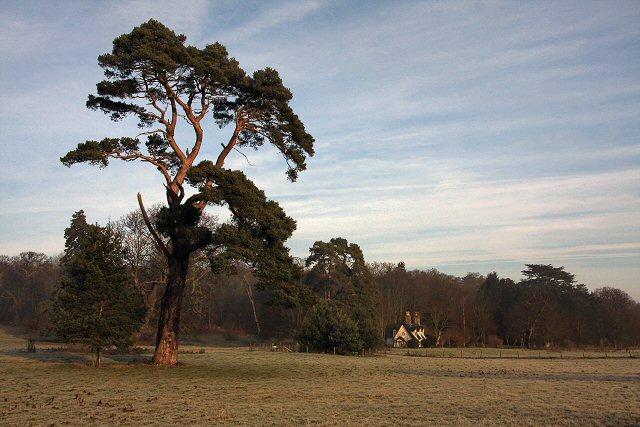 Ickworth Park