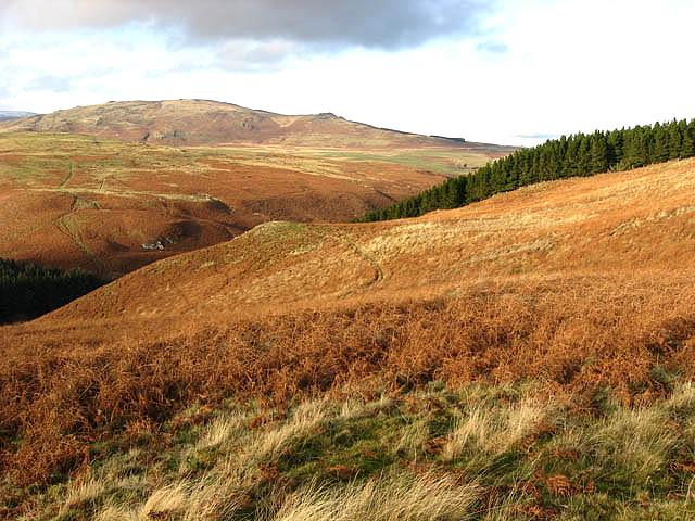Bracken covered hillside