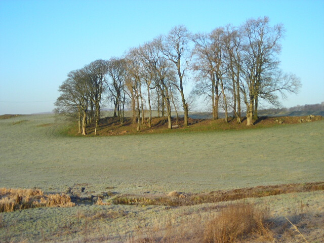 Bank of Trees Near Meikle Barncleugh