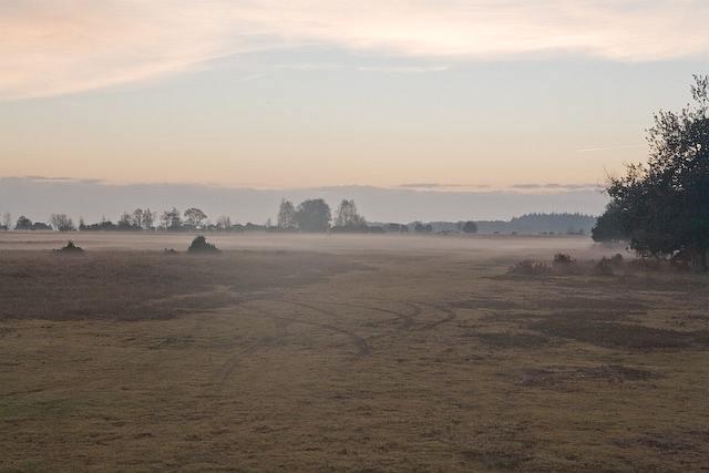 Fritham Plain, New Forest