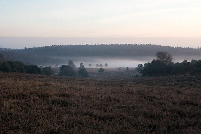 View over Rakes Brakes Bottom from Fritham Plain, New Forest