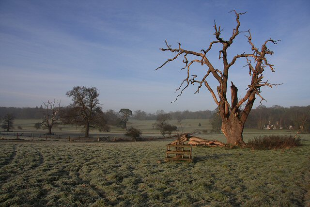 Dead tree in Ickworth Park
