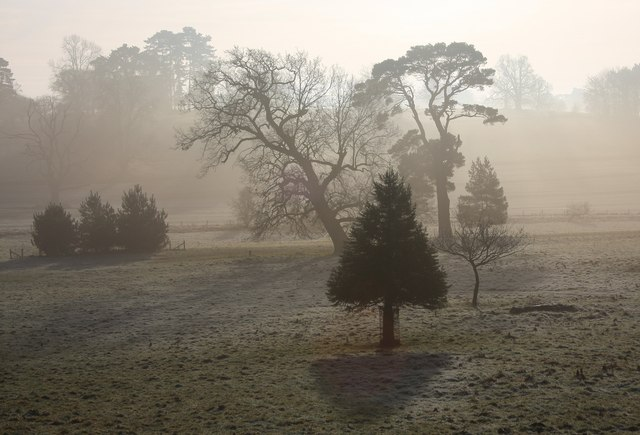 Misty trees in Ickworth Park