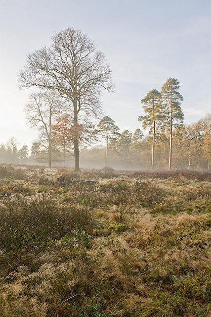 A felled area of Sloden Inclosure, New Forest