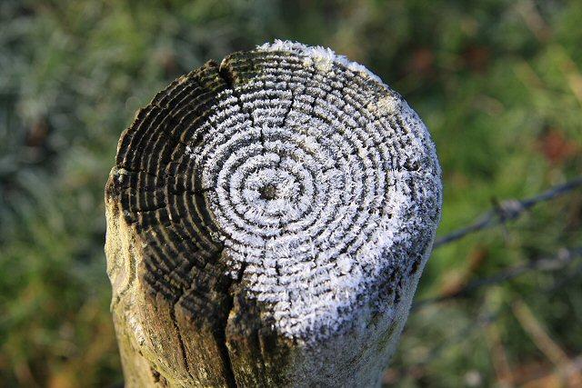 Fencepost in Ickworth Park
