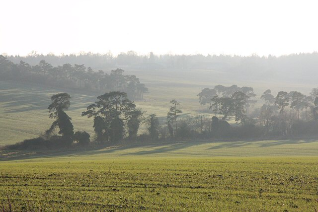 Trees at Westley Bottom