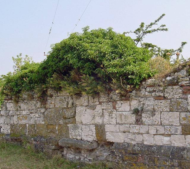 Old Ivy-clad Wall, Thornton Abbey