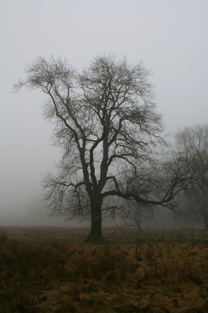Trees in the Mist, Malham
