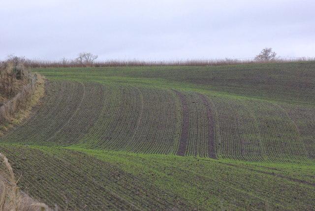 Field near Gellyburn
