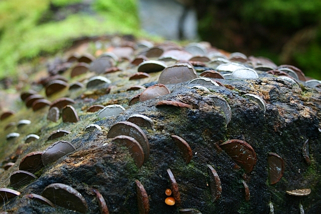 Coins in a Tree (2)