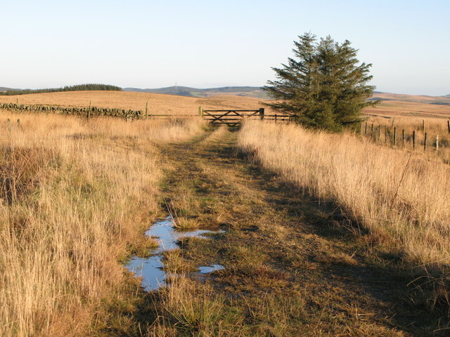 Track leading to Seed Rigg