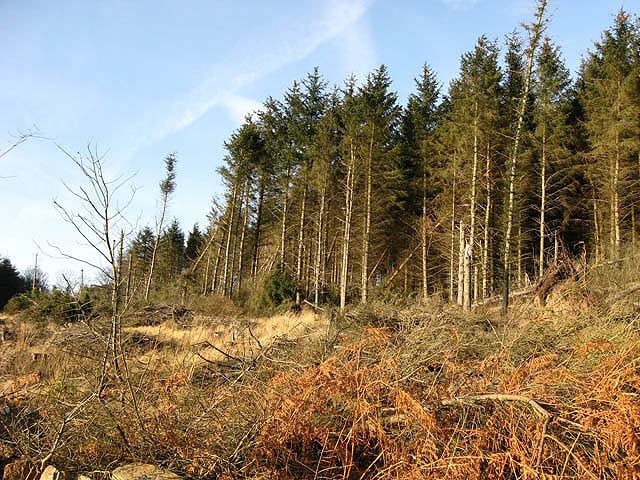 Forestry on Ewe Hill