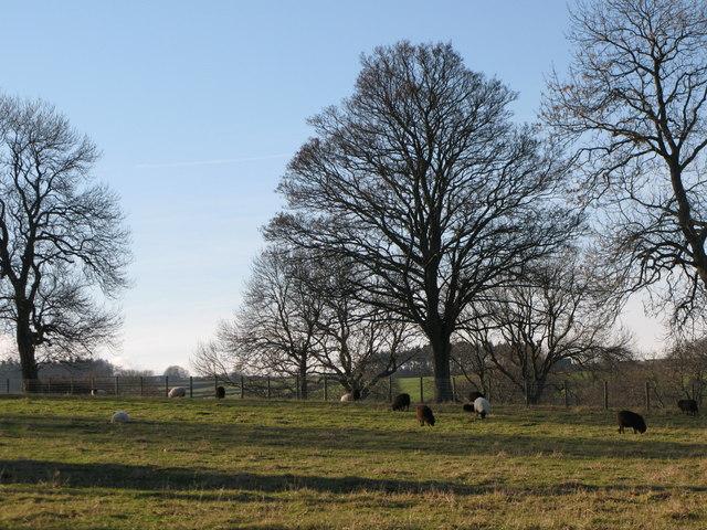 Pastures near Thornley Villa