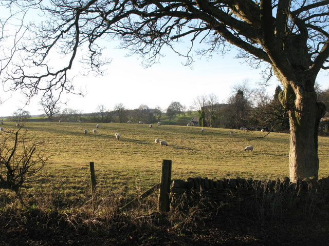 Pastures near Thornley Gate