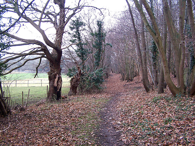 Footpath through Wardwell Wood